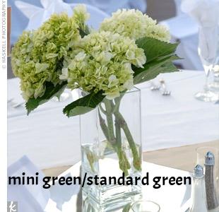 6-green-hydrangea.jpg