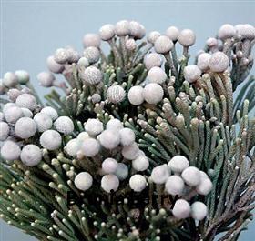 07-silver brunia fall winter.jpg