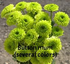 15-spray_mum_button_green.jpg