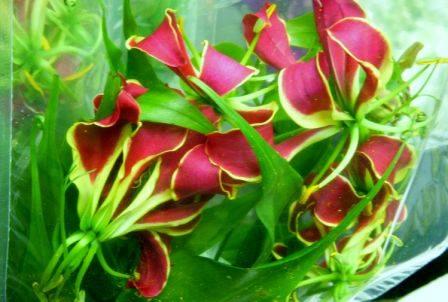 42-nerine lily.jpg