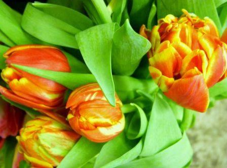 39-double tulip.jpg