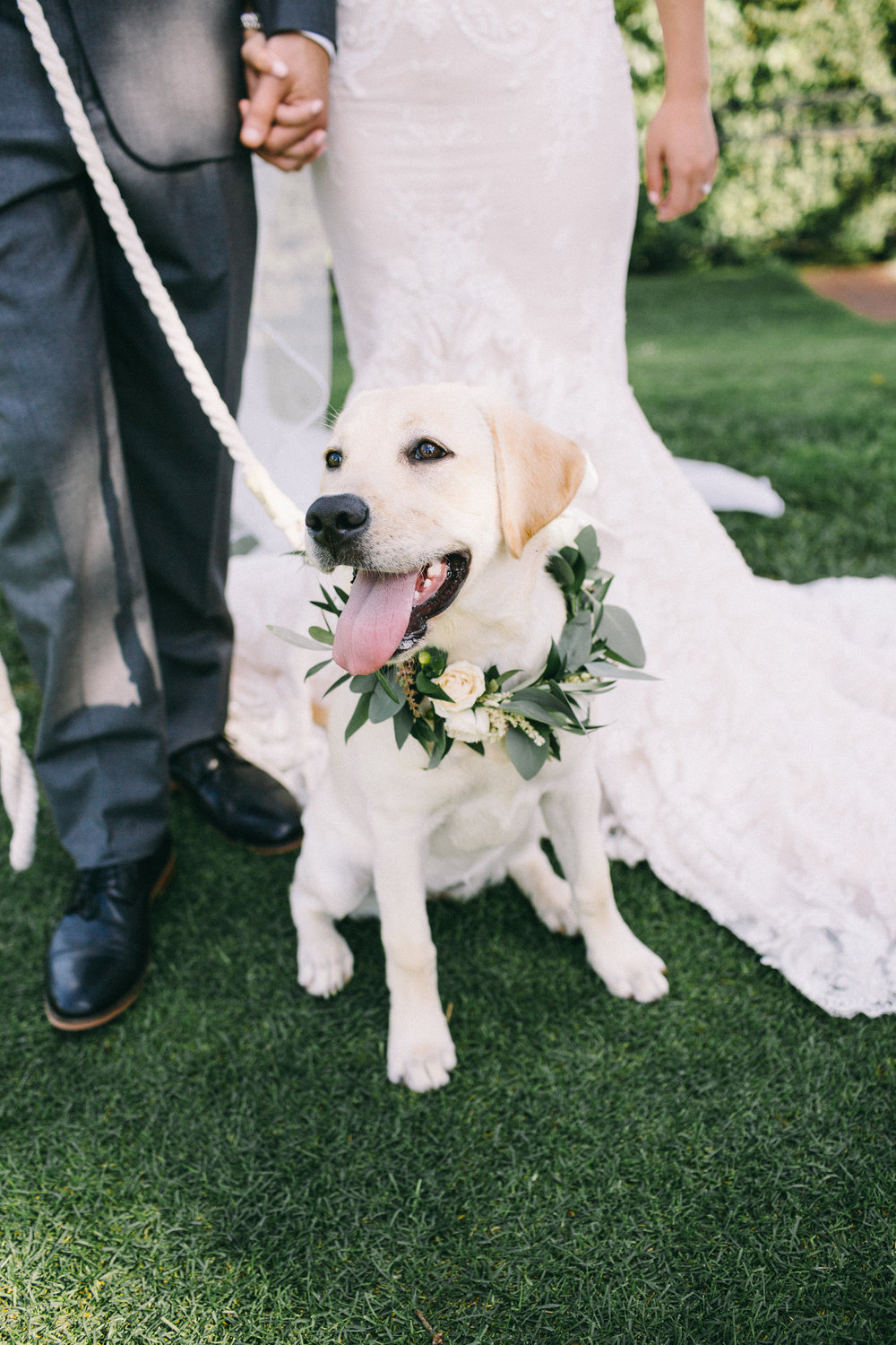 Dog Floral Collar Wedding Jaimee Morse Photography