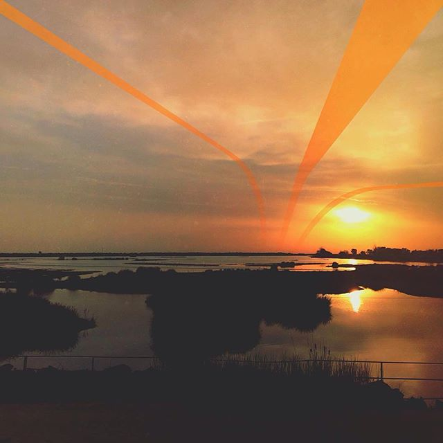 "Edit by @yulman ""It's like a jungle sometimes""  #lorystripes  Cool accentuating for this sunset photo!"