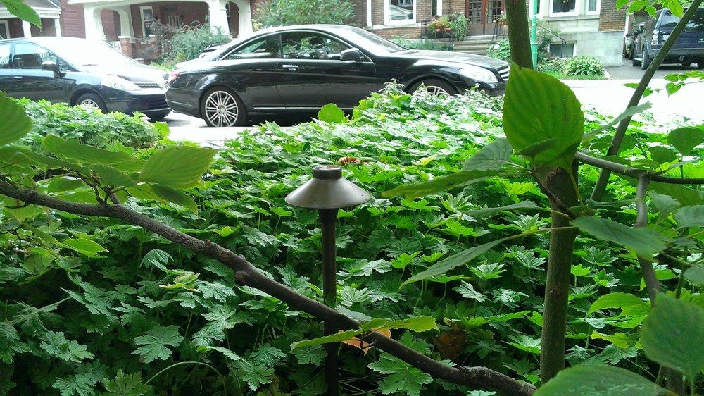 éclairage de jardins Montréal
