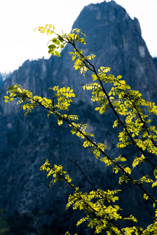 Nature Photography Exports Portfolio-1.jpg