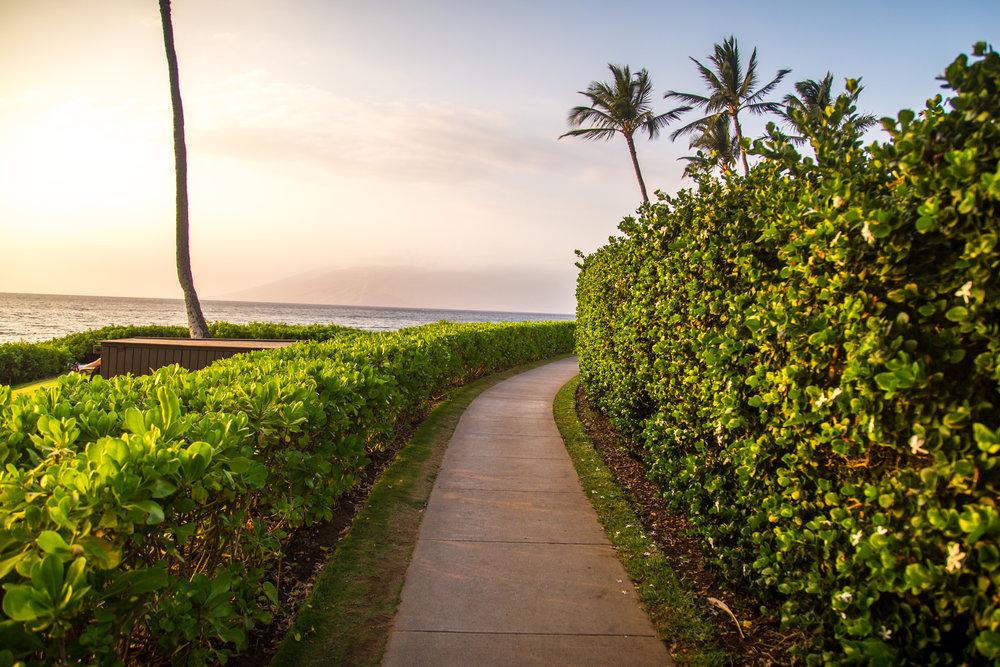 BM-Hawaii-March2016-50.jpg
