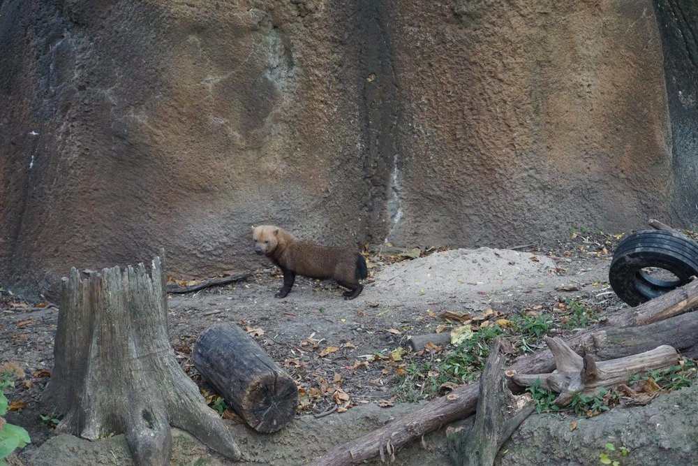 The Bush Dog!