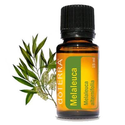 Melaleuca Oil | döTERRA