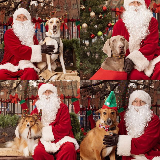 Just uploaded SantaPaws @segerdogpark - thank you everyone for coming we raised a lot of money for PAWS
