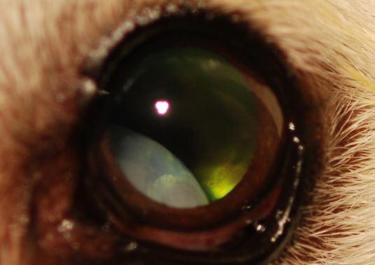 eye lens.JPG