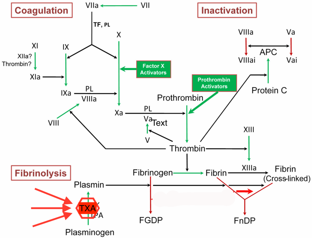 TXA stops the conversion of plasminogen to plasmin