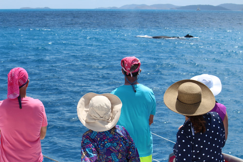Sacks/Steffan/Madonia charter Whale Watching, BVI, March 2018