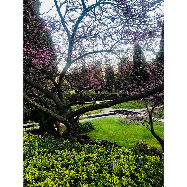 • O U T & A B O U T • Cherry Blossom Season🏞😍 #melbourne #cherryblossom #nature #parks #sunshine #happy #flowers #spring #september#casting #people #melbournestreets #highwaycasting