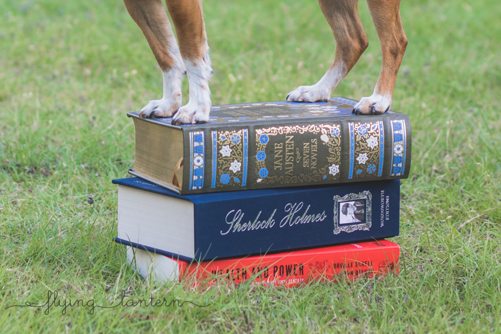dog on top of book pile close up on paws