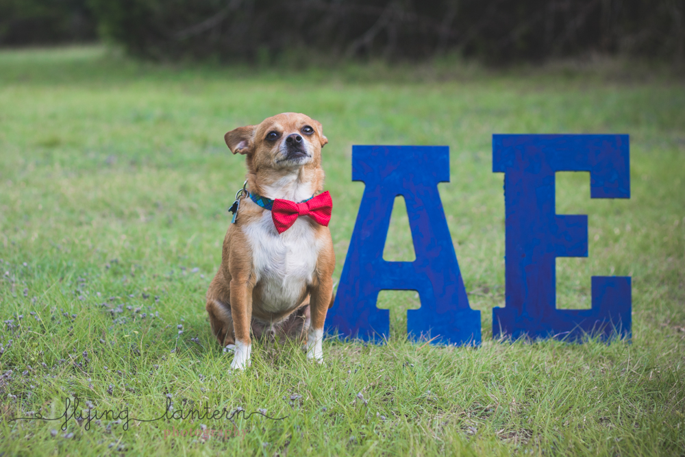 happy dog in park standing next to wooden letters wearing bowtie