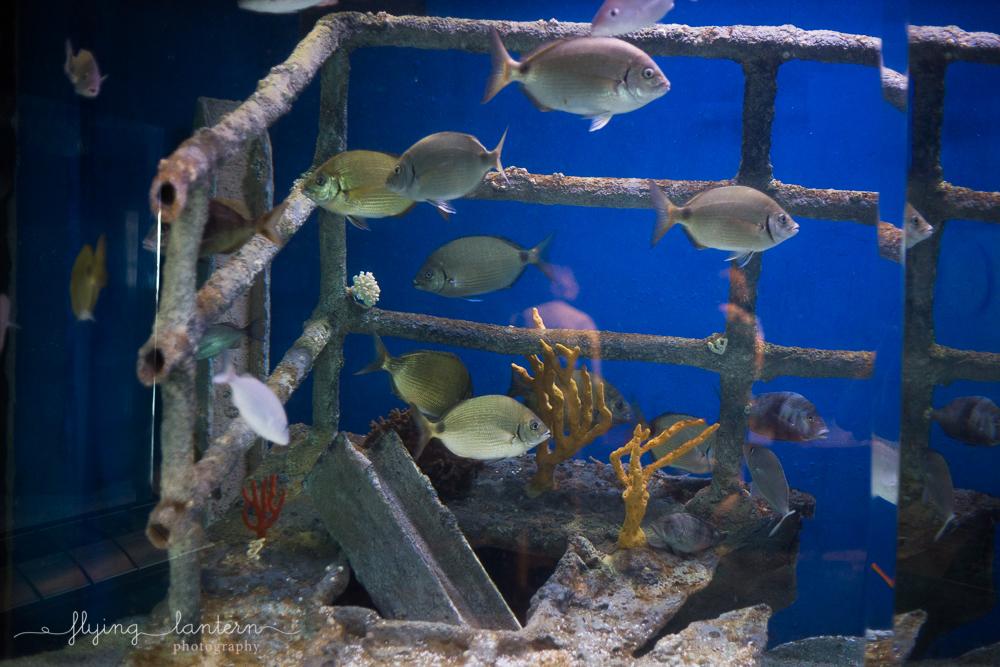 South Carolina Aquarium in Charleston, South Carolina