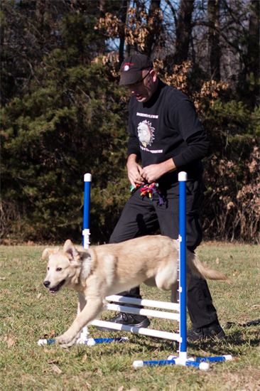 dOgBEDIENCE Dog Trainer & Behaviorist  Michael Peer working with 6 mo old Bear