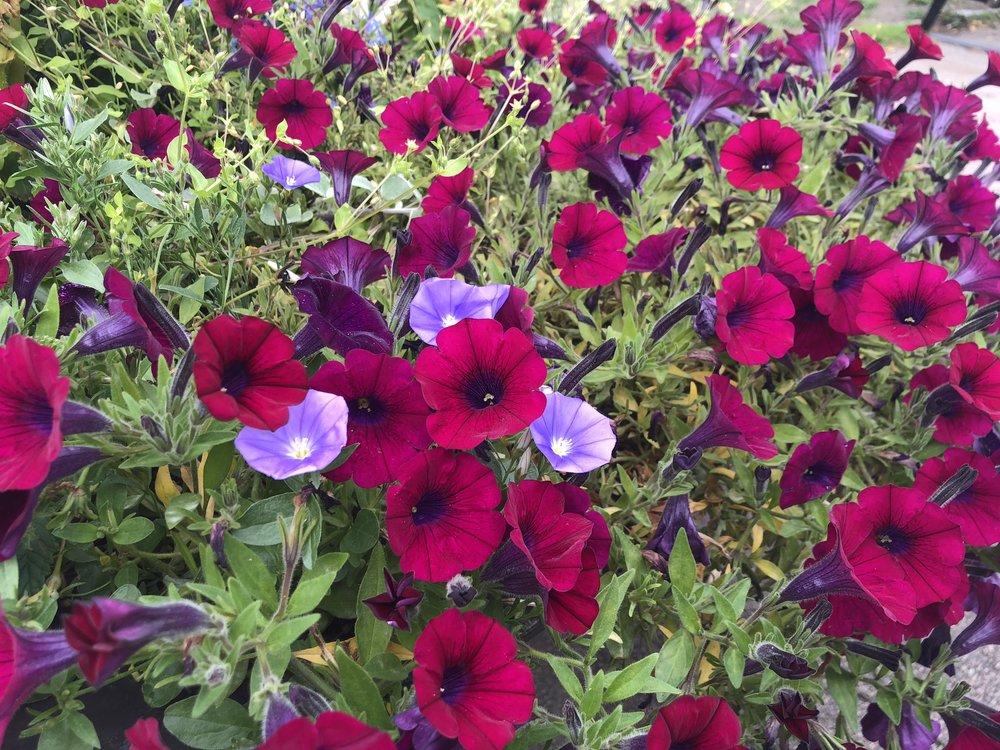 Blomster i Oslo