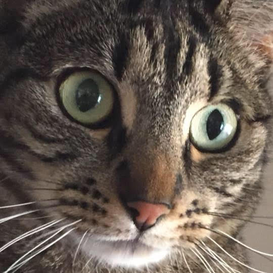 Jenna cat.jpg