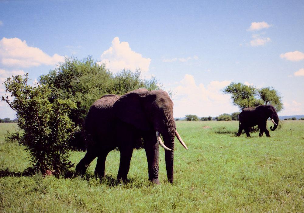Afrika ny 22.jpg
