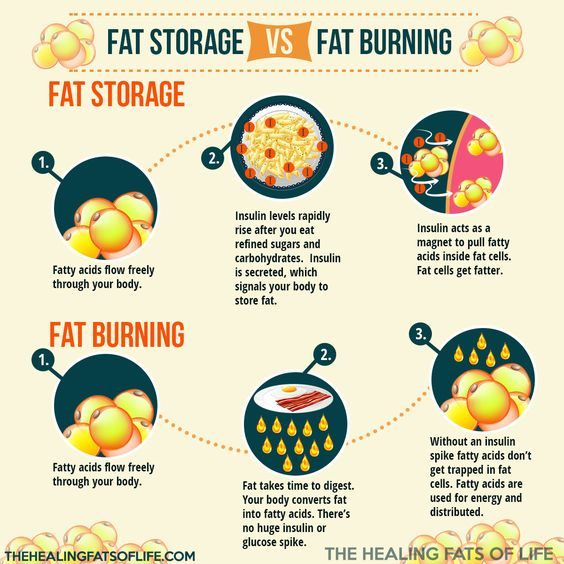 Image result for Fat storage and energy in fat loss