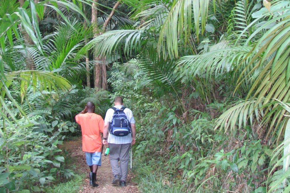 Tobago's rainforest.