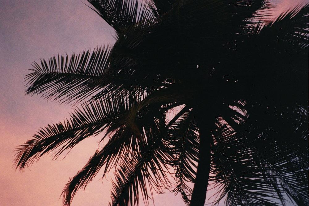 2018 Trinidad59.jpg