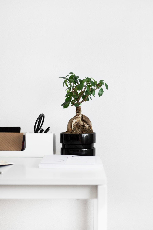desk-table-plant-wood-flower-green-69805-pxhere.com.jpg