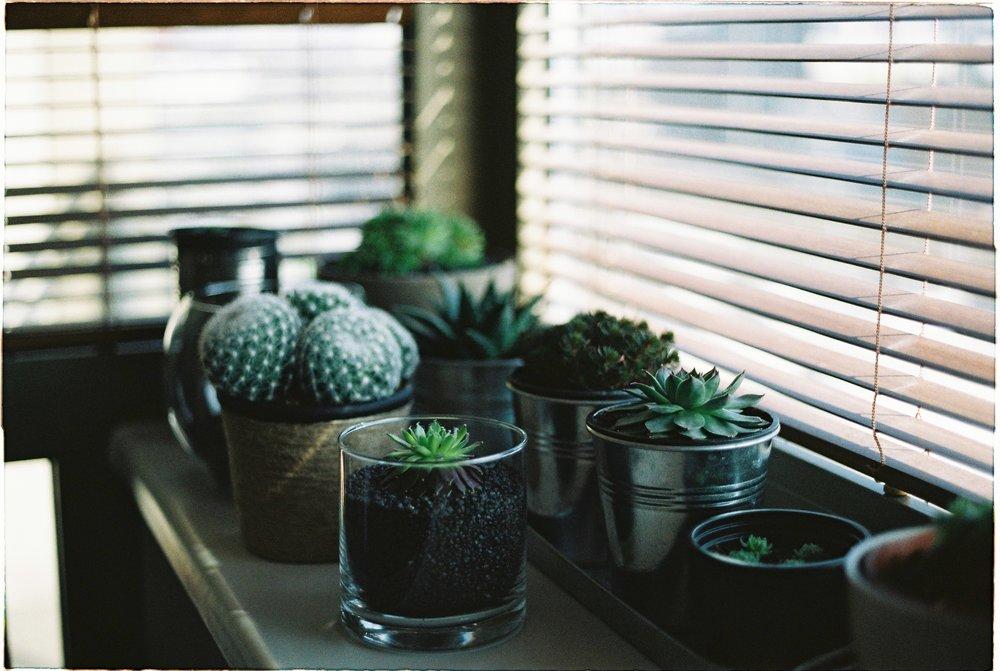 table-flower-window-green-room-lighting-1082670-pxhere.com.jpg