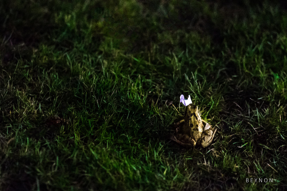 A frog hops away with a piece of confetti