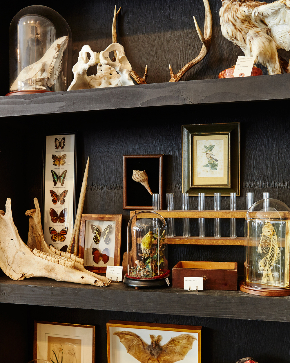 COLLECTIBLES AT HOUND & QUAIL