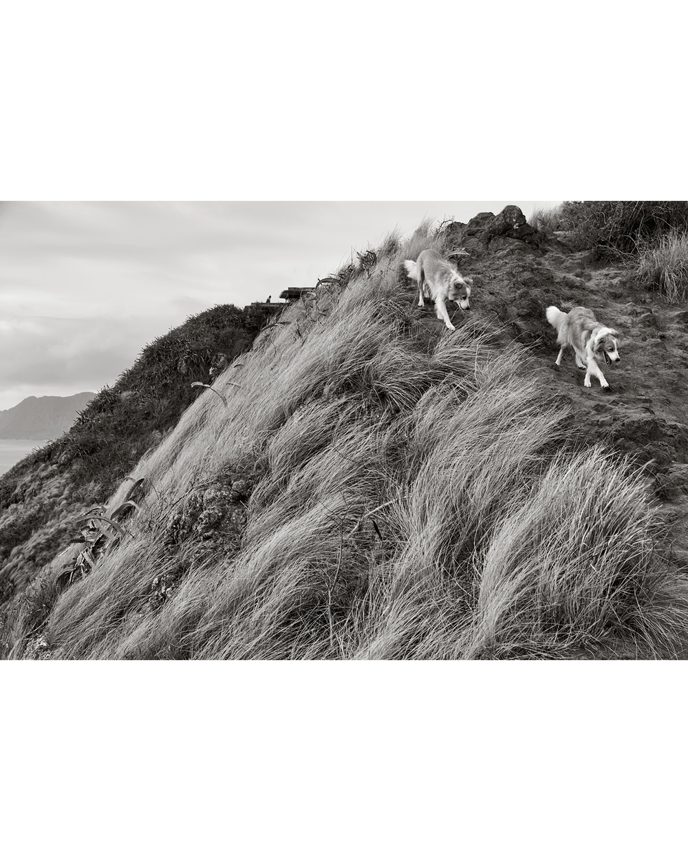 HAWAIIAN DOG'S LIFE