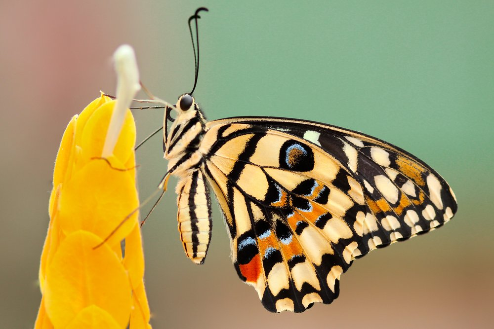 Transformation - Deep spiritual work requires and enables us to transform into a new version of ourselves.
