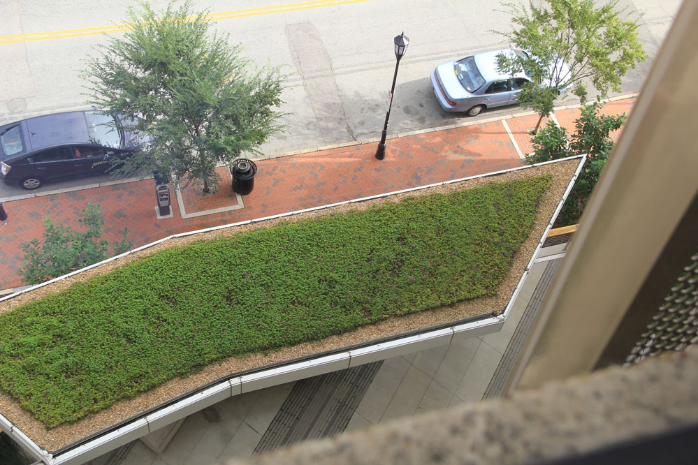 The green roof of the plaza canopy thrives without irrigation.
