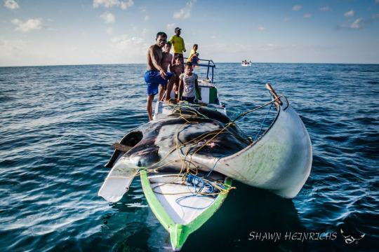 Transforming a Community: Fishing for Mantas and Ecotourism