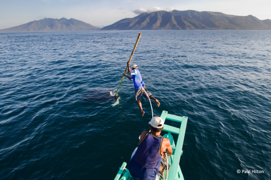 State of the Ocean: Hunting Manta Rays in Indonesia