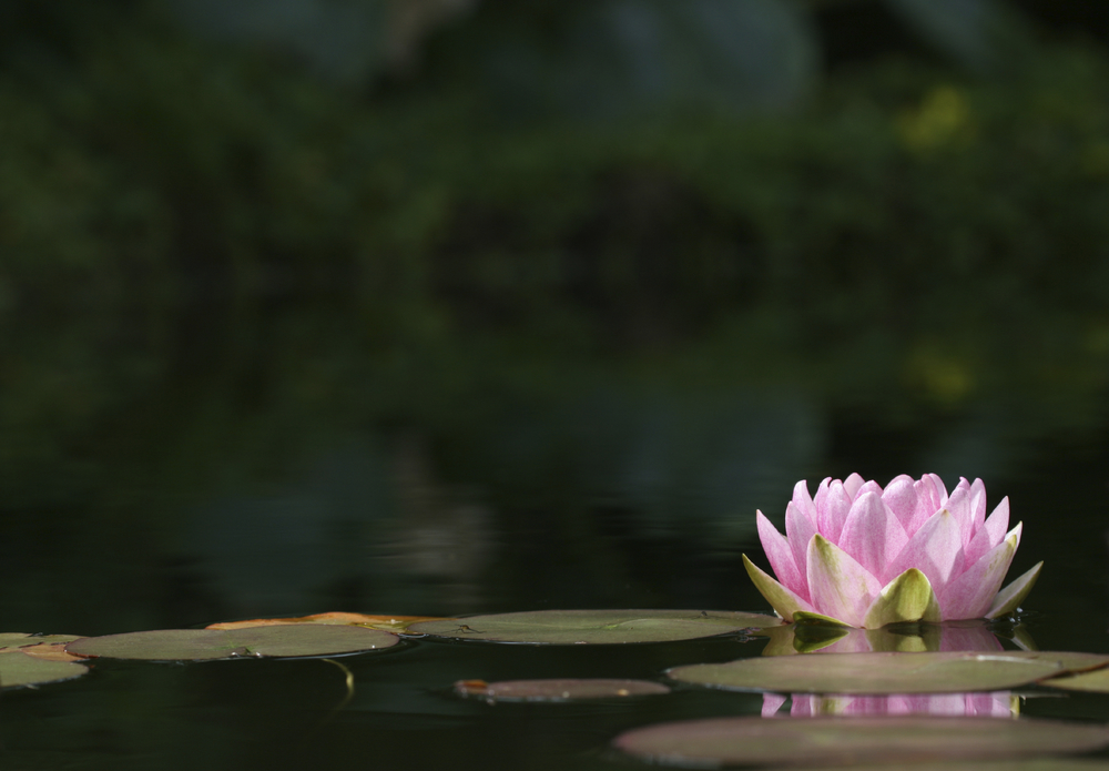 Mindfulness Therapy - Lynn Carroll - Delray Beach, FL