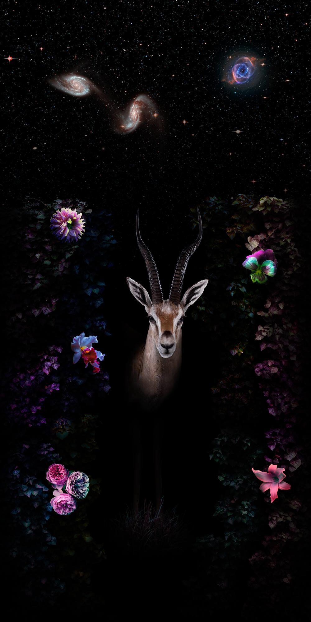 gazelle-ioa.jpg