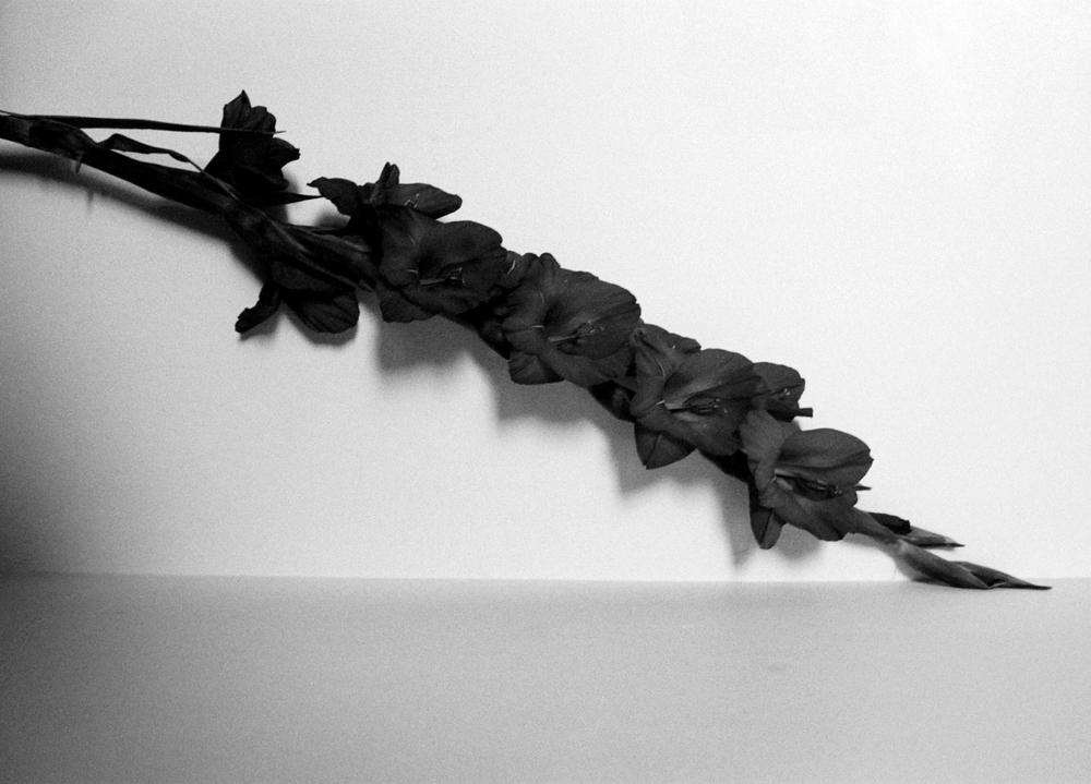wallflower.jpg