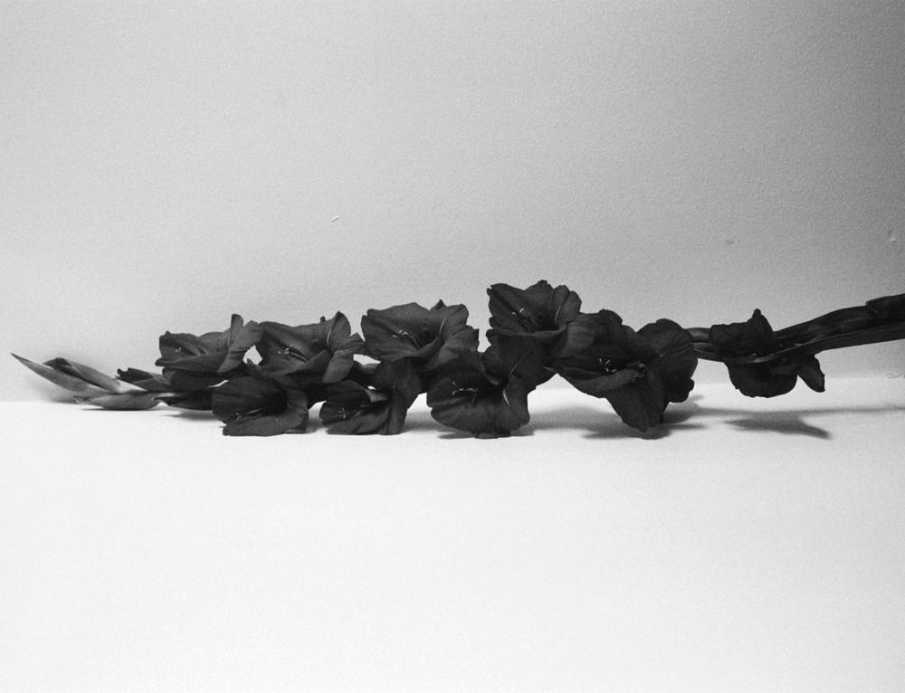 wallflower3.jpg