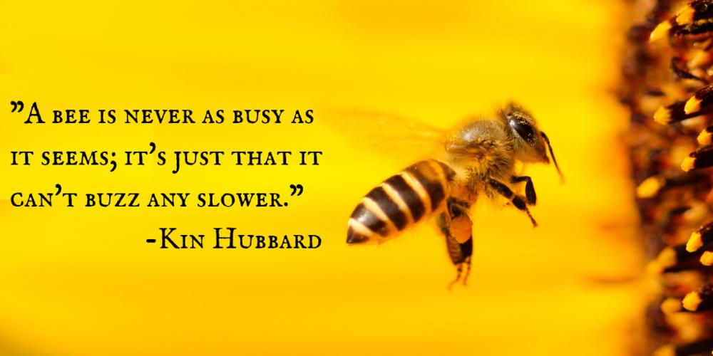 Honey bees & honey