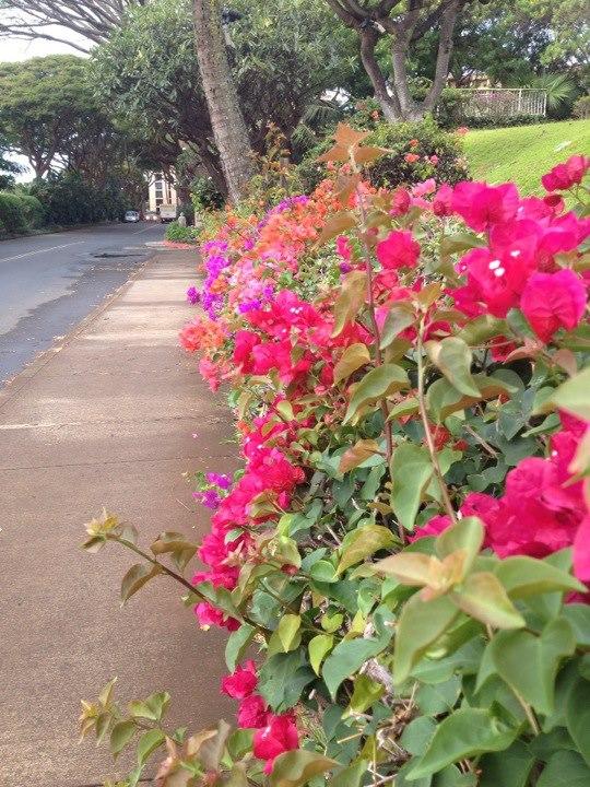 maui-flowers.jpg