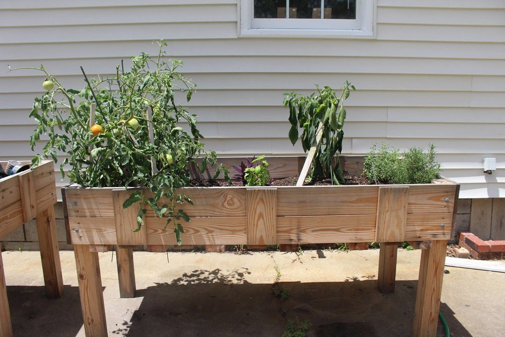 Raised garden bed outside Tami's temporary rehabilitation center