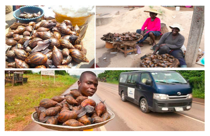 On the fourth day, participants were introduced to potential or possible markets for snail businesses. They were taught how to identify markets, segment market areas, and adopt the niche marketing approach.