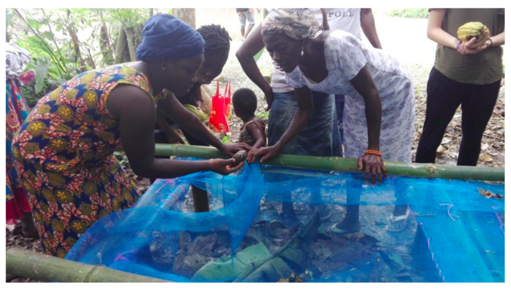 Two weeks after the training, the team went to Obenkrom, and Asomdwee communities to check on the participants and how far they were with the construction of their own pen houses for their snails. They were amazed to find out that all of them were ready for the snails. Each participant was giving twenty (20) breeding snails each to start with. The participants were very anxious to begin and very thankful for the project and promised to make the pilot project a success.