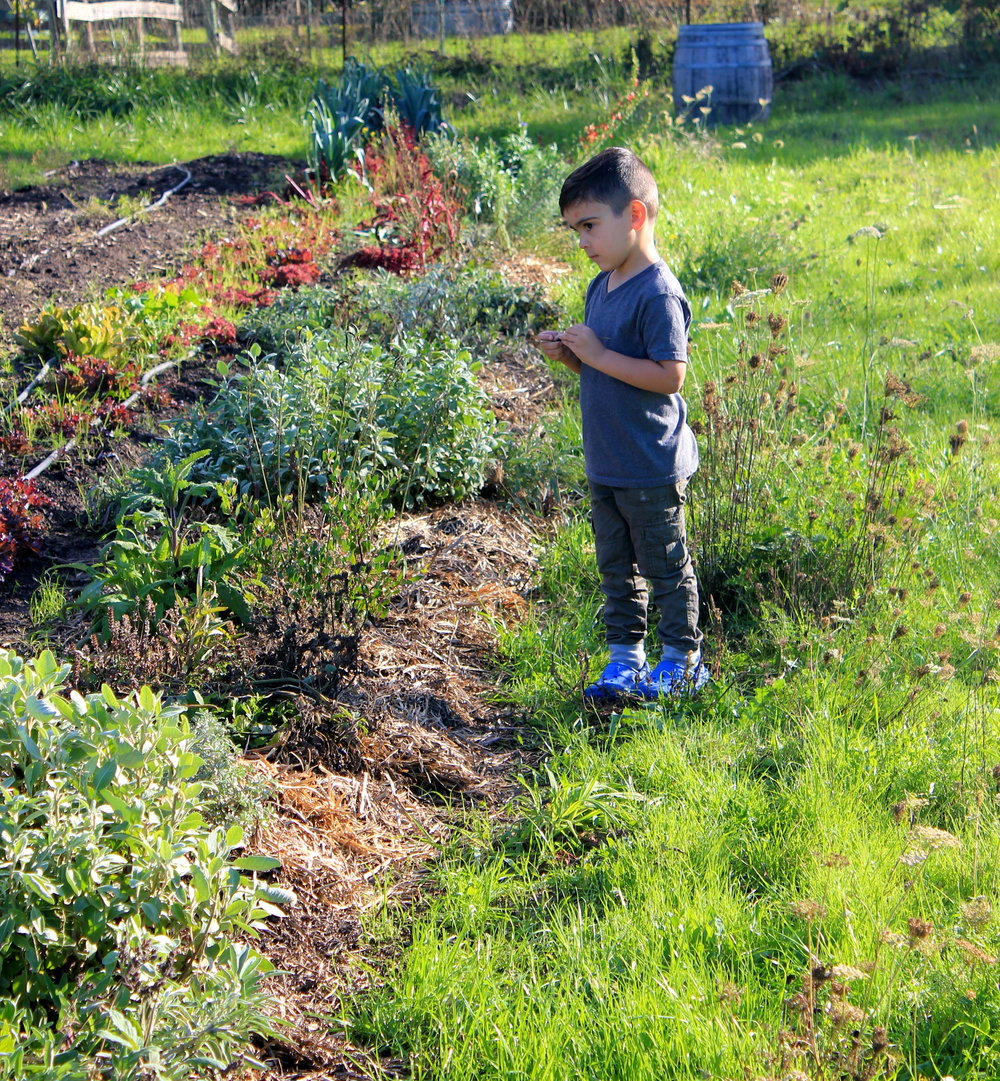 Luca spreading milkweed.jpg