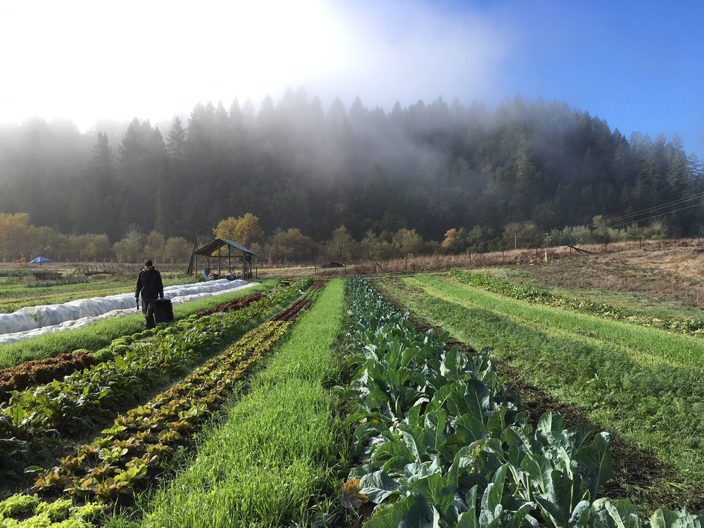 Farmer David on this morning's harvest as the fog burned off