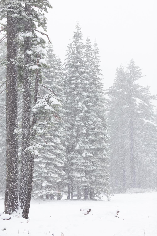 SN Winter_web_28.jpg