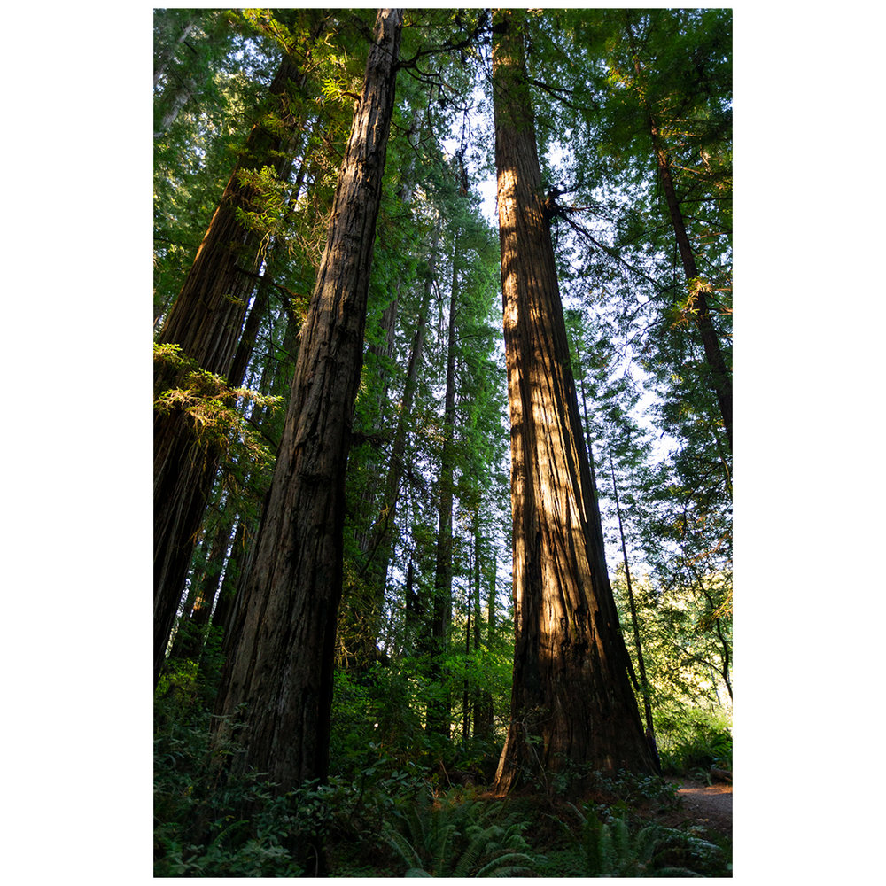 Stout Grove Trees.jpg