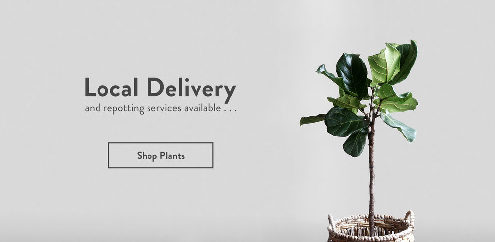 Lakewood-Plant-Company_Hero_Local-Delivery.jpg